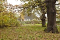 Jesienny park Zdjęcia Royalty Free