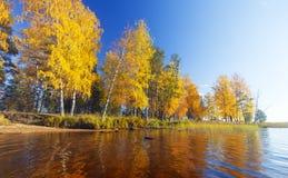 jesienny park jesienią jeziora drzewa Fotografia Royalty Free