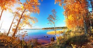 jesienny park jesienią jeziora drzewa Obrazy Stock