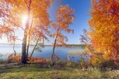 jesienny park jesienią jeziora drzewa Obrazy Royalty Free