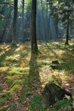 jesienny promieni świetlnych słońce Obrazy Stock