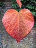 Jesienny serce Obraz Stock