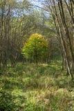 jesienny spadku lasu krajobraz zdjęcia royalty free