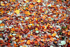 jesienny sposób Zdjęcia Stock