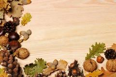 jesienny tło Zdjęcia Stock