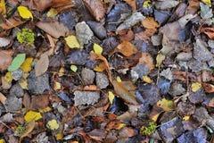 jesienny tło Fotografia Stock