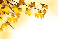 jesienny tło Obraz Royalty Free