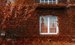 jesienny tło Zdjęcie Royalty Free