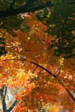 jesienny ulistnienia Zdjęcia Royalty Free