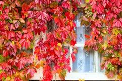 jesienny ulistnienia Obrazy Royalty Free