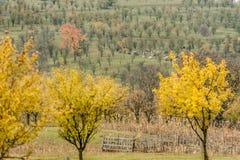 jesienny widok Zdjęcia Stock