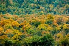 jesienny widok Zdjęcie Royalty Free