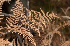 Jesienny wrażenie Fotografia Stock