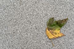 Jesienny wyblakły liść na szarym tle z obfitością policjant obrazy stock