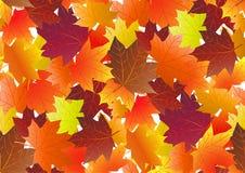 Jesienny wzór z spadków liśćmi klonowymi również zwrócić corel ilustracji wektora ilustracji
