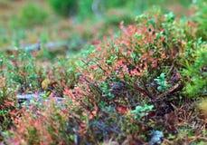 Jesienny zwarty lasu krajobraz obrazy stock