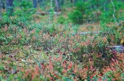 Jesienny zwarty lasu krajobraz zdjęcie stock