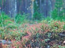 Jesienny zwarty lasu krajobraz fotografia royalty free