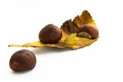 jesiennych kasztanów barwiony liść Obraz Royalty Free