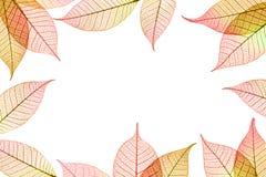 Jesiennych liści ramowy skład Fotografia Stock
