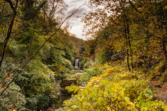 Jesmond Dene in autumn Royalty Free Stock Photo