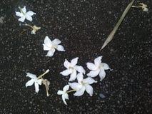 Jessamine arancio, fiori sul pavimento Immagini Stock Libere da Diritti