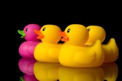 jest czarny wyzwania różnych kaczki gumowymi Zdjęcie Royalty Free