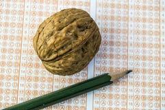 Jest jakaś skutek ludzki mózg i orzech włoski tam, inteligencja orzech włoski? fotografia royalty free