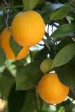 jest pomarańczowy Zdjęcie Stock