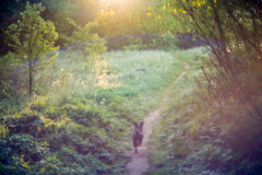 Jest prześladowanym bieg w lasowej ścieżce, czarodziejska atmosfera Fotografia Royalty Free