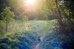 Jest prześladowanym bieg w lasowej ścieżce, czarodziejska ranek atmosfera Fotografia Stock