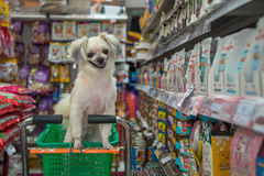 Jest prześladowanym w ten sposób ślicznego czekanie przy zwierzę domowe sklepem zwierzę domowe właściciel Fotografia Royalty Free