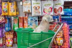 Jest prześladowanym w ten sposób ślicznego czekanie przy zwierzę domowe sklepem zwierzę domowe właściciel Zdjęcie Royalty Free