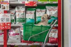 Jest prześladowanym w ten sposób ślicznego czekanie przy zwierzę domowe sklepem zwierzę domowe właściciel Zdjęcie Stock
