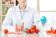 Jesteś ja ty pewny jesteś bezpieczny jeść genetycznego modyfikaci jedzenie obraz stock