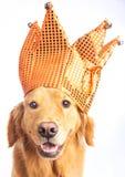 Jester σκυλί Στοκ φωτογραφίες με δικαίωμα ελεύθερης χρήσης