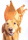 Jester Dog Royalty Free Stock Photos