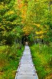 Jesupsleep met de herfstkleuren in het Nationale Park van Acadia royalty-vrije stock afbeeldingen