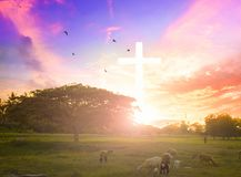 Jesus christ mercy at cross on mountain sunset background He belief to worship son of god. Christian concept background:Eucharist Therapy Bless God Helping Royalty Free Stock Photos