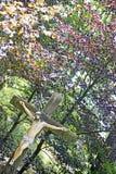 Jesus Christ-Statue auf wilder Waldhintergrundbestqualität lizenzfreies stockbild
