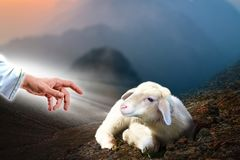 Jesus hand reaching out to a lost sheep