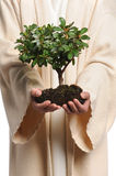 Jesus Hands Holding Tree. Jesus hands holding small tree isolated over white background Royalty Free Stock Photo