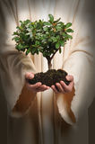 Jesus Hands Holding Tree Royalty Free Stock Photo