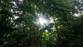 Jesus-Licht zwischen Bäumen Lizenzfreie Stockbilder
