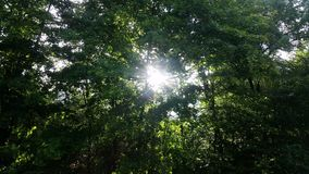 Jesus light between trees. Sun Light between trees gives hope Royalty Free Stock Images