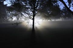 jesus tree royaltyfria foton