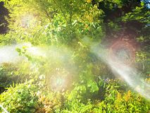 Automatic garden sprinkler in action watering plants. stock images