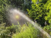 The jet from the watering device irrigates the green plants. royalty free stock images