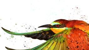 Jet coloré d'oiseau et d'aquarelle sur le blanc Photos stock