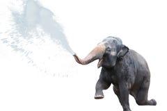 Jet d'eau d'éléphant à l'arrière-plan blanc Photo libre de droits